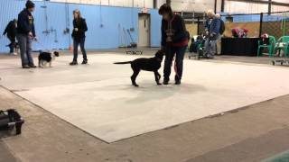 Foundation Puppy Training - Fenton, Mi