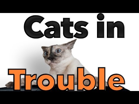 The Paw Project – Cats In Trouble (Official Music Video)