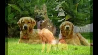 Видео про умных собак