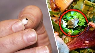 The Most Bizarre Things People Found Hiding in Their Food