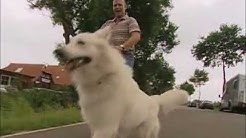 Eindrücke vom 8-tägigen Intensivkurs für Problemhunde