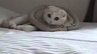 Котенок на кровати  superkot ucoz ru