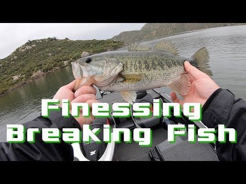 How to CATCH FISH BOILING the surface