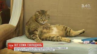 Кіт-хитрун ласує смаколиками одразу в 7 господинь у Одесі