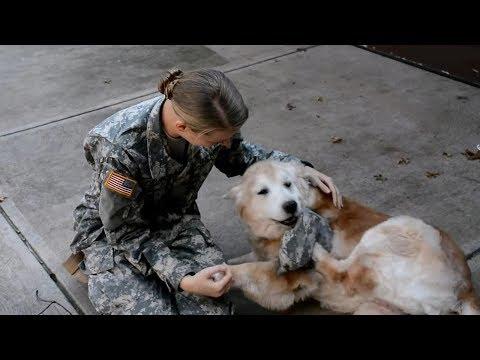 Top 5 Khoảnh Khắc Vui Mừng Của Những Chú Chó Khi Gặp Lại Chủ Nhân Của Mình ᴴᴰ ✔