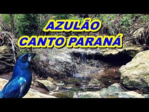 AZULÃO CANTO PARANÁ PARA ENCARTE