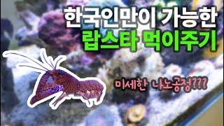 바닷가재 랍스타 키우기! 한국인만이 가능한 먹이주기~