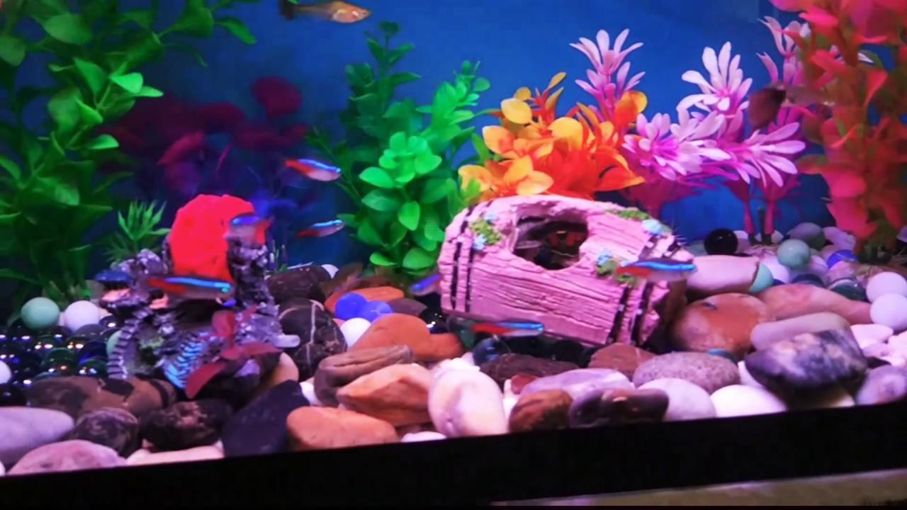 Beautiful Guppy Tetra In A 10 Gallons Fish Tank Youtube