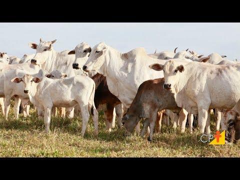 Curso a Distância Terminação de Bovinos em Pasto