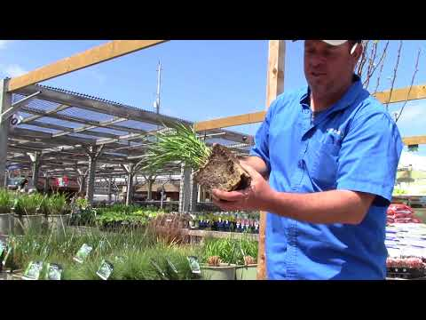How to Plant Perennials : New Roots Garden Centre