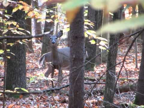 Saratoga Spa State Park - White Tail Deer