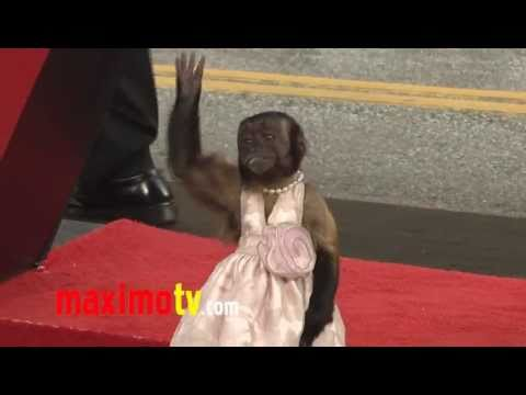 Crystal the Monkey EPIC Red Carpet Adventure