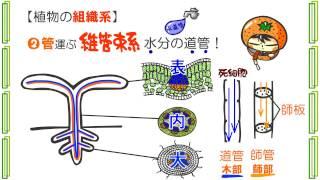 生物3章9話「植物組織の分類」byWEB玉塾
