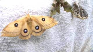 the death of a moth summary The death of the moth analysis - part 2 life is a constant struggle against the ever present chill of death - the death of the moth analysis introduction.