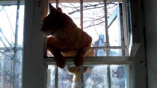 кот хочет кошку(кошка убежала от домогавшегося ея котека и укрылась в решотчатой сушке., 2010-04-08T09:35:40.000Z)