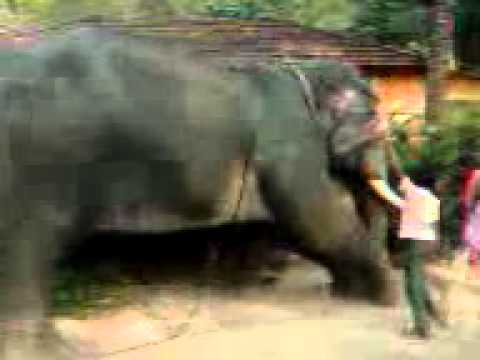Kerala elephant attack youtube - photo#37