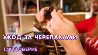 """Уход за черепахами - т/к """"Доверие"""", 2012 г"""