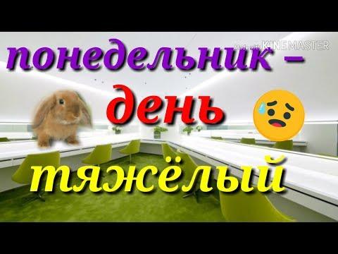 ПЕСНЯ ДЛЯ ТРУДЯЩИХСЯ! Приколы. Кролик поет.