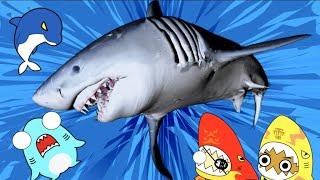 イルカが風邪をひいた?!ホホジロザメと水族館の冒険!サメニンジャーアニメ!