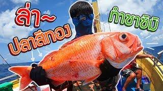 ล่าปลาทองยักษ์มาทำเมนูซาชิมิ!? (ปลาทองแห่งท้องทะล!!) l ออกล่ากิน EP.10