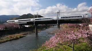 【第30回河津桜まつり】河津桜と伊豆急電車 2020.2.8