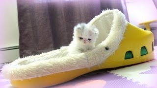 Kitten Marshmallow: 4 weeks old and counting