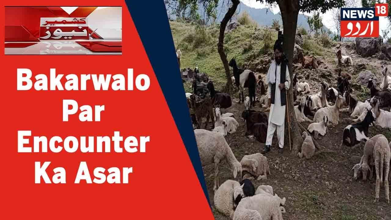 Download Kashmir News: Poonch Mein Encounter Ka Asar | Bakarwal Pareshani Ka Huwe Shikar | News18 Urdu