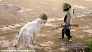 Коты на войне 2016 год