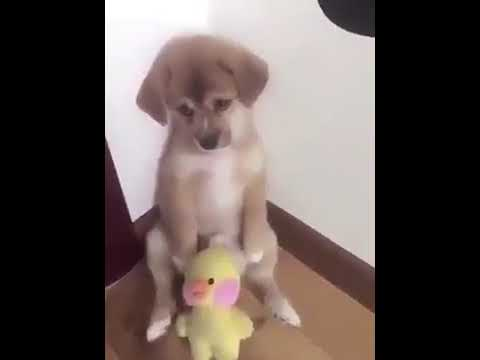 Perro llora (viral)