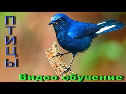 Картинки птичек