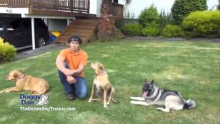 The Online Dog Trainer Review - How To Train Your Dog Effectively