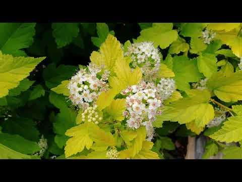 Релакс в саду или ностальгия. Цветы и муравьи. Природа. Фон. Заставка