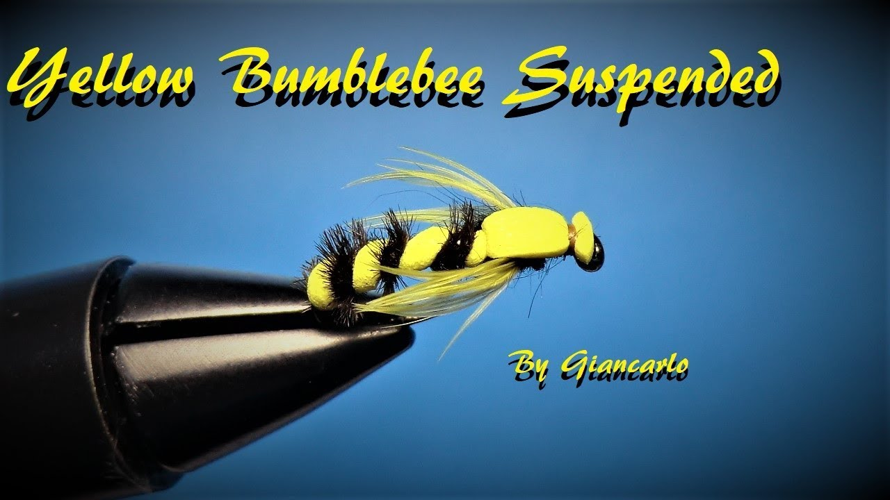 YELLOW BUMBLEBEE SUSPENDED By Giancarlo - YouTube