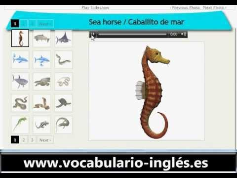 Vocabulario De Ingles Peces Y Reptiles Httpwwwfacile Anglais