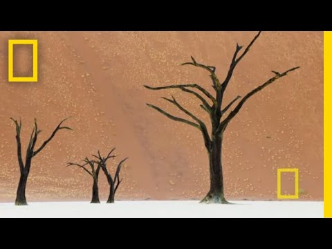 The Surreal World of Frans Lanting | Nat Geo Live