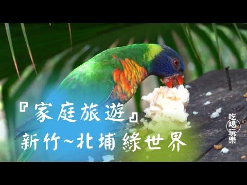 #生態農場 #新竹旅遊 #新竹北埔綠世界 『家庭旅遊』新竹北埔綠世界鳥類紀錄