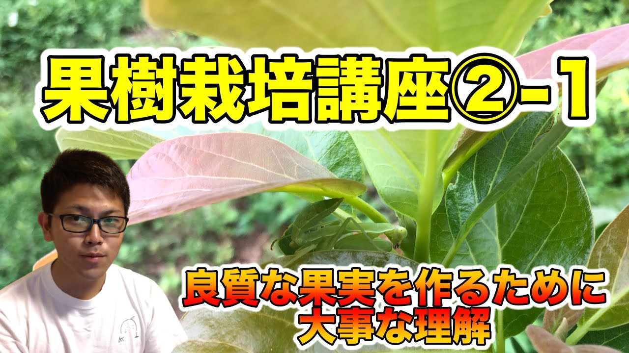 【果樹栽培講座②-1】初心者のための栽培基礎知識,果樹の一生,光合成をとことん理解する【栄養成長と生殖成長】