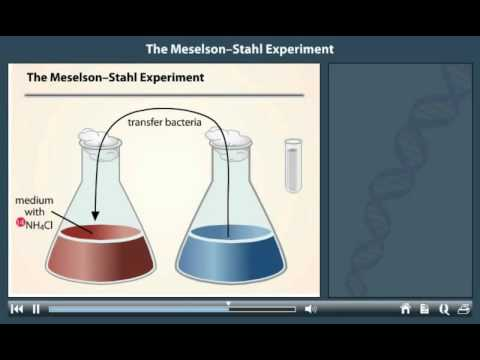 Meselson and Stahl Experiment Animation