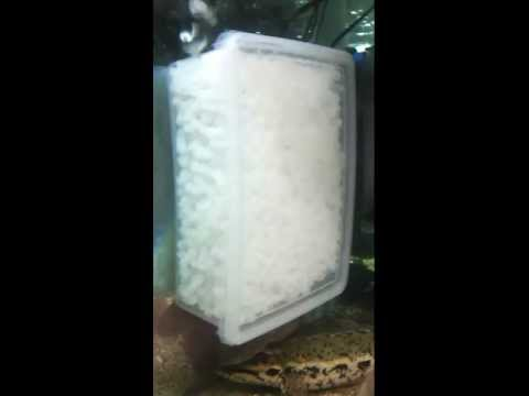 DIY Moving Bed Filtration with K1 media using Toyogo Container 5802.