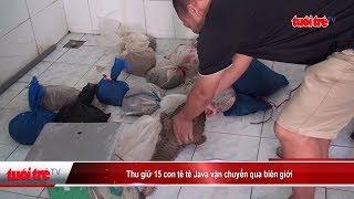 Thu giữ 15 con tê tê Java vận chuyển qua biên giới | Truyền Hình - Báo Tuổi Trẻ