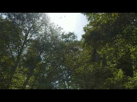 Big Sur U11 Video 1