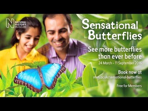 Sensational Butterflies 2016 | Natural History Museum