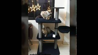 Cat tree cat toys wholesale price delivery all over India |#persiancat  #cat toys