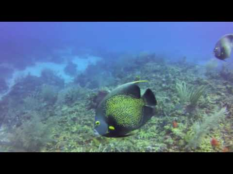 Belize Barrier Reef Scuba Diving