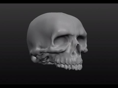 3D skull using Sculptris