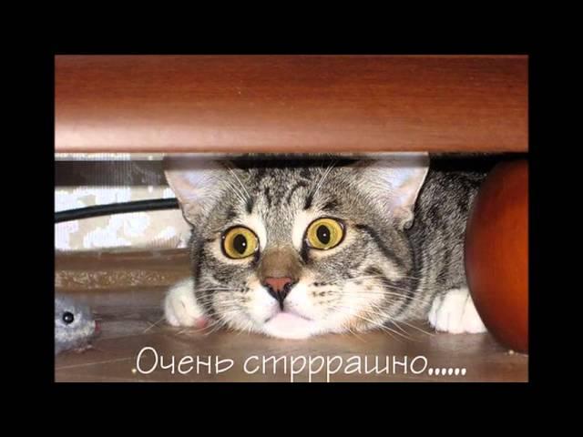У кошки четыре ноги mp3 скачать