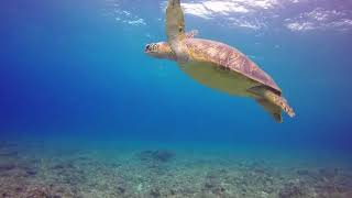 BEAUTIFUL BEACH WITH SEA ANIMALS AND PIANO MUSIC