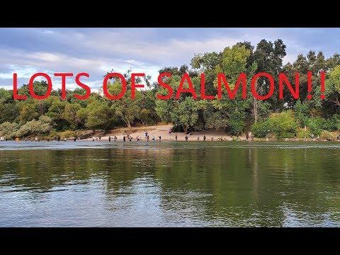 Sacramento River King Salmon Update September 28, 2019