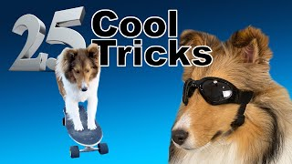 25 Cool Tricks for Any Dog!  Cricket 'The Sheltie' Chronicles Compilation