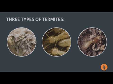 Facts about Termites: Pest Control Guide for Homeowners